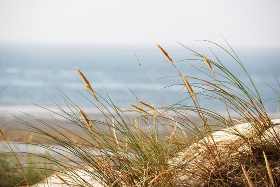 binedoro Blog, Norderney, Urlaub, Meer, Nordsee, Strand, Düne, Möven